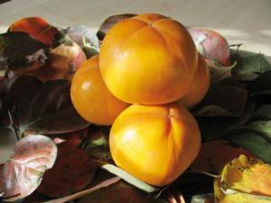 Kaki Ribera Sun<sup>®</sup> conferma il suo potenziale - Plantgest news sulle varietà di piante