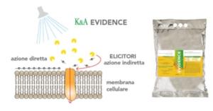 kalos-elicitori-evidence