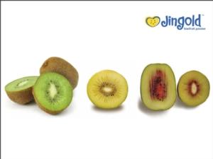 Kiwi, il nuovo tricolore per Jingold - Plantgest news sulle varietà di piante