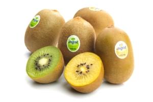 Kiwi Jingold: bene la produzione in Italia ora si attende il Cile - Plantgest news sulle varietà di piante