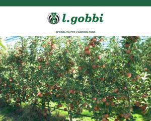 l-gobbi-sunstop-2020