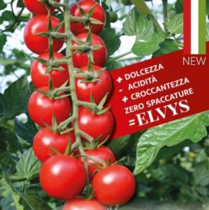 EVENTO ONLINE - Isi Sementi presenta Elvys F1 (Isi 82205) - Plantgest news sulle varietà di piante