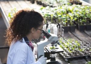 Ogm, Nbt e Tea. Tre acronimi cruciali per il miglioramento vegetale - Plantgest news sulle varietà di piante