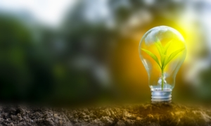 lampadina-pianta-idee-green-bioenergie-ambiente-by-surasak-adobe-stock-750x500