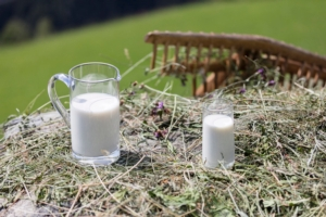 latte-fieno-idm-sudtirol-frieder-blickle-750x500