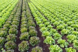 EVENTO ONLINE - Bilancio fitosanitario 2020-2021 delle colture ortive da seme