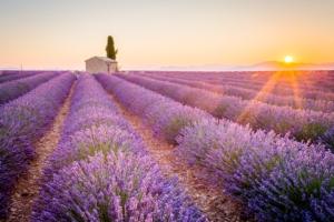 Erbe officinali, opportunità per gli agricoltori ma serve aggregazione - Plantgest news sulle varietà di piante