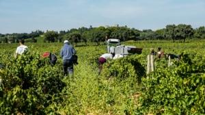 lavoratori-campi-lavoro-stagionale-by-pictures-news-adobe-stock-750x421