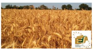 Sprint Veg: farina del tuo sacco - L.E.A. - Fertilgest News