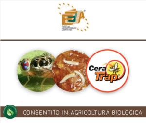 lea-cera-trap-2019