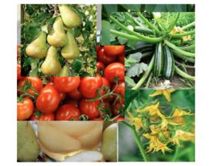 Fruit Safe: più fiori, più frutti - L.E.A. - Fertilgest News