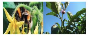 Hortofix: e il raccolto aumenta - Fertilgest News