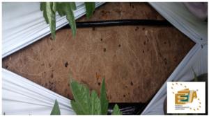 Radici più robuste, radici più sane - colture - Fertilgest