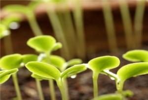 """Subsed, i """"terricci"""" che vengono dal mare - Plantgest news sulle varietà di piante"""