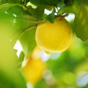 limone-limoni-by-yellowj-fotolia-750x750