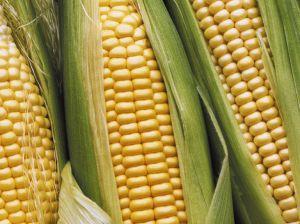 mais-belriose-maize