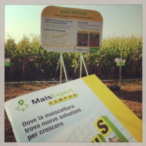mais-expert-campus-syngenta-ibridi-artesian-by-cspadoni-agronotizie-instagram-750