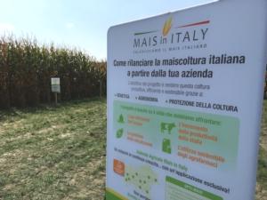 La maiscoltura rialza la testa con Mais in Italy