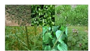 Erbicida Premium Green, contro un ampio spettro di infestanti