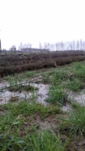 maltempo-danni-imprenditrice-agricola-alice-perini-di-villimpenta-mantova-fonte-coldiretti-mantova