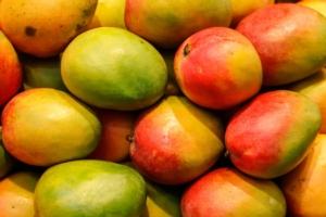 Mango, una nuova promessa - Plantgest news sulle varietà di piante