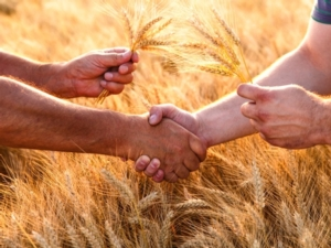 mani-grano-fonte-eurochem-agro1