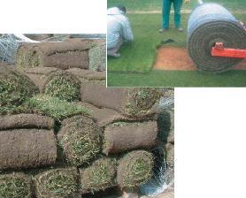 Tappeti erbosi difesa fertilizzanti sementi for Realizzazione laghetti artificiali quanto costa