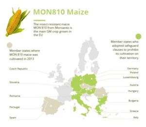 mappa-leggi-anti-ogm-in-europa-terzo-art-ott-2021-rosato-fonte-parlamento-europeo