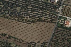 mappa-satellitare-oliveto-google