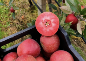 A qualcuno piace rossa - Plantgest news sulle varietà di piante