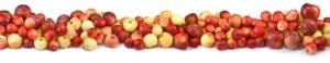 mele-diverse-varieta-by-cooperr-adobe-stock-750x144