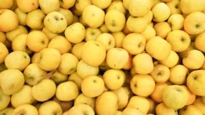 mele-golden-delicious-by-ocean-prod-adobe-stock-750x422