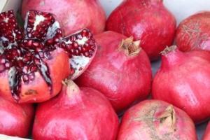Coltivazioni emergenti cercasi - Plantgest news sulle varietà di piante