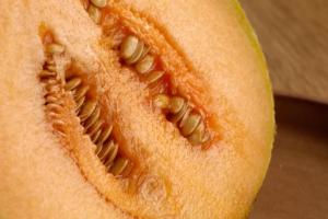 Melone, un protagonista dell'estate - Plantgest news sulle varietà di piante