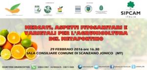 mercati-aspetti-fitosanitari-varietali-agrumicoltura-metapontino