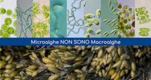 Microalghe AgriAlgae<sup>®</sup>, differenti dalle altre alghe - AlgaEnergy Italia :: Brand AgriAlgae® - Fertilgest News