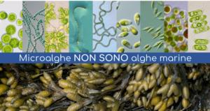 microalghe-non-sono-alghe-febbraio-2020-fonte-agrialgae-algaenergy