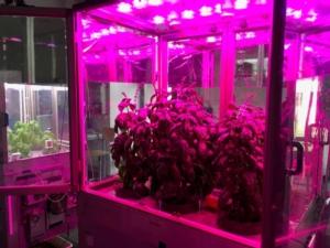 microcosmo-per-allevamento-piante-al-chiuso03mag2018enea