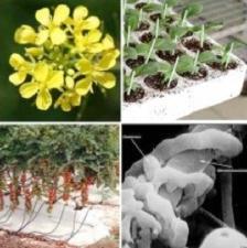 microrganismi-biofumigazione-innesto-workshop-fritegotto-settembre-2012