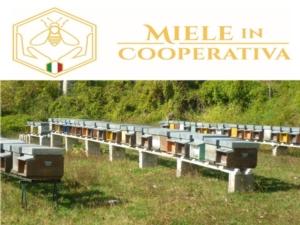 miele-in-cooperativa-logo-by-mieleincoperativa-jpg