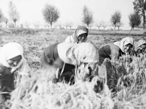 mostra-donne-in-agricoltura-ferrara-ott-nov-2017-cia-fonte-cia