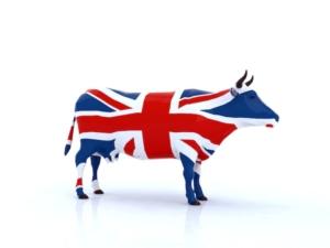 mucca-vacca-inglese-inghilterra-brexit-fabioberti-it-fotolia-750