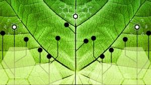 Nanotecnologie, una nuova frontiera per l'agricoltura sostenibile