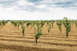 netafim-irrigazione-nocciolo-jpg