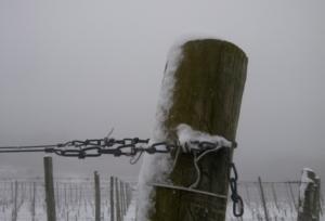 neve-vigna-inverno-vigneto-by-matteo-giusti-agronotizie-jpg