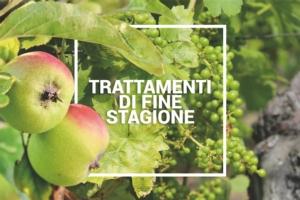 Vite e melo: trattamenti di fine stagione per produzioni di alta qualità