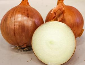 Cipolle, ecco Nogal F1 di Enza Zaden - Plantgest news sulle varietà di piante