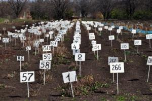Se l'agricoltura dà i numeri