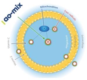 nutreco-biodisponibilita-cellulare-di-ao-mix