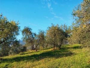 oliveto-collina-by-matteo-giusti-agronotizie-jpg